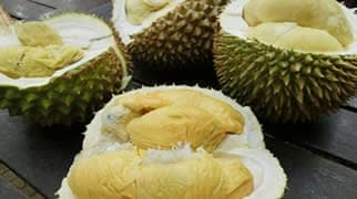 Durian · How to taste in Weh Island · Aceh · Sumatra · Indonesia